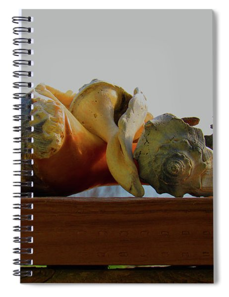 Shells Of The Sea In Orange And Gray Spiral Notebook