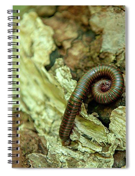 Shenandoah National Park Milipede Spiral Notebook