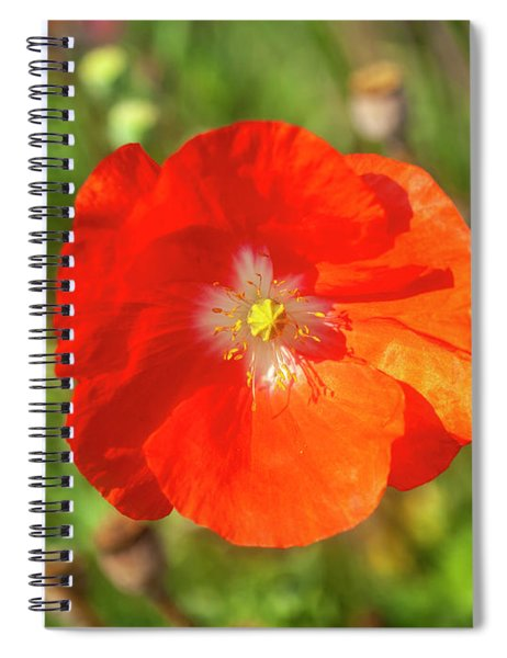 Shirley Poppy 2018-10 Spiral Notebook