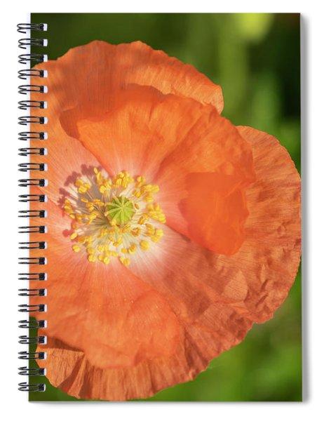 Shirley Poppy 2018-13 Spiral Notebook