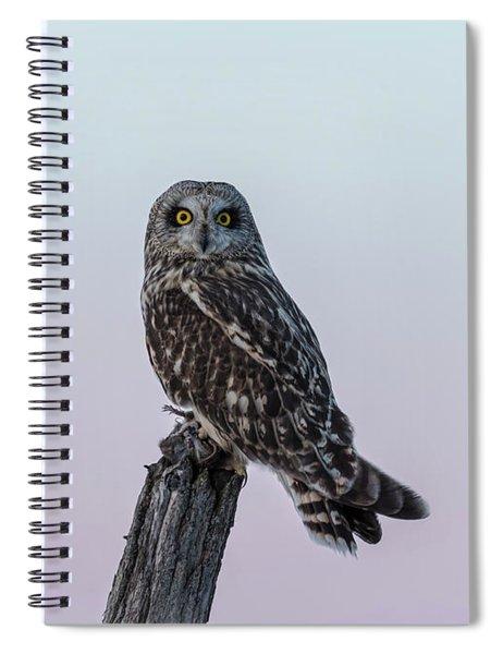 Short-eared Owl 2018-1 Spiral Notebook