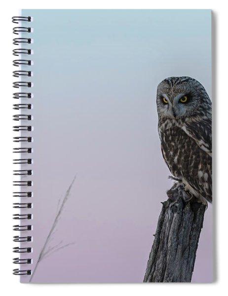 Short-eared Owl 2018-4 Spiral Notebook