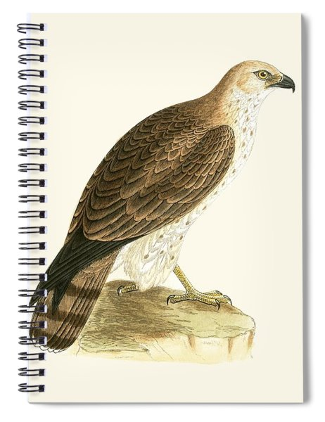 Short Toed Eagle Spiral Notebook