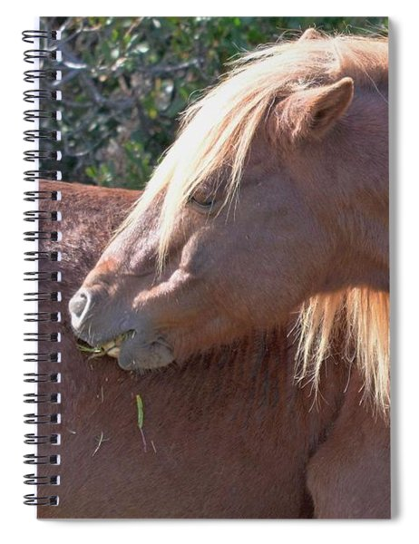 Shy One - Wild Pony Of Assateague Island Spiral Notebook