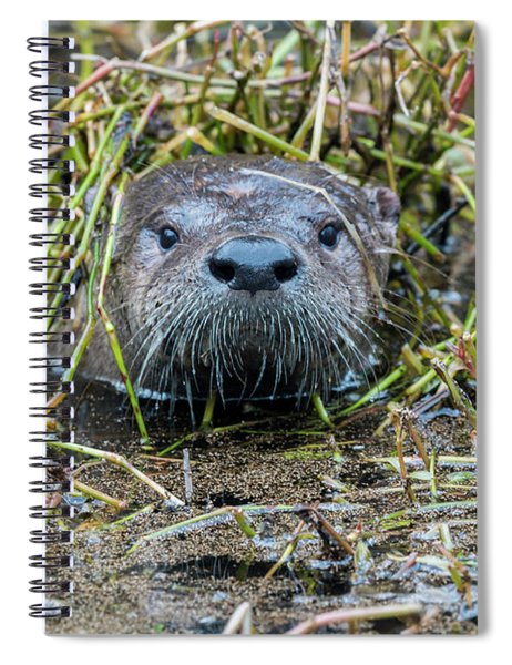 Shy River Otter Spiral Notebook