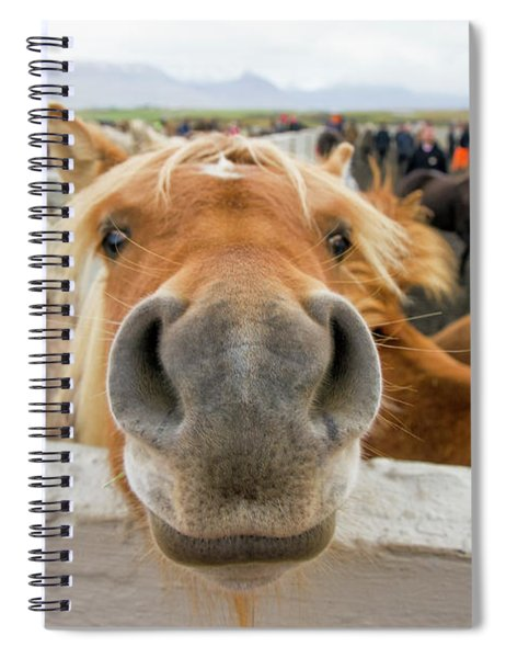 Silly Icelandic Horse Spiral Notebook