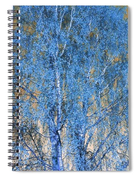 Silver Birch In Blue Spiral Notebook