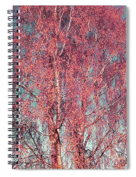 Silver Birch In Pink Spiral Notebook