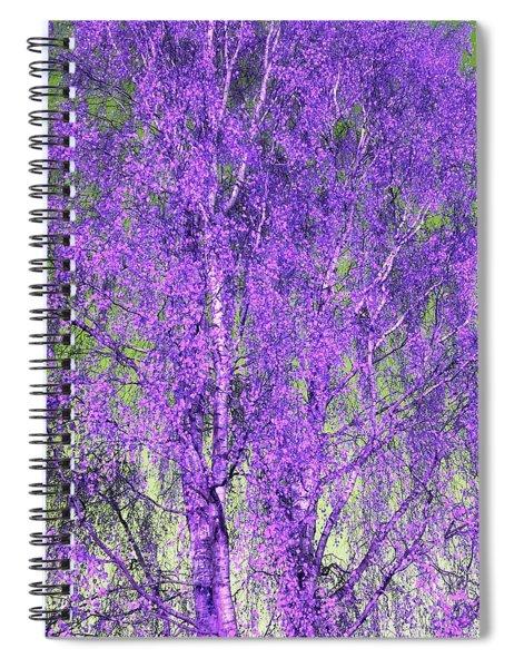 Silver Birch In Violet Spiral Notebook
