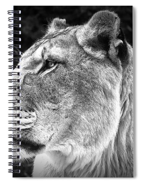 Silver Lioness  Spiral Notebook