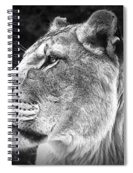 Silver Lioness - Squareformat Spiral Notebook