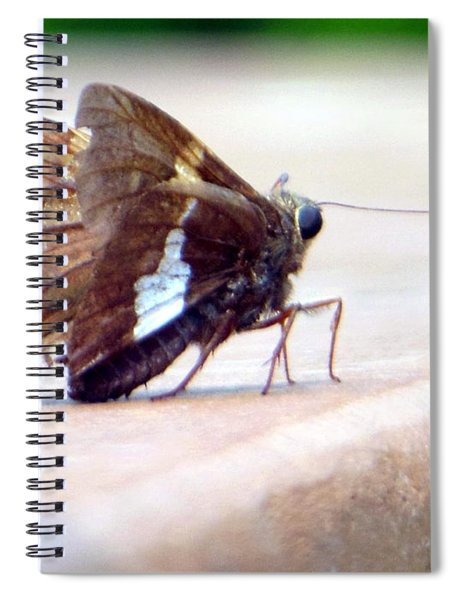 Silver Spotted Skipper Butterfly Spiral Notebook
