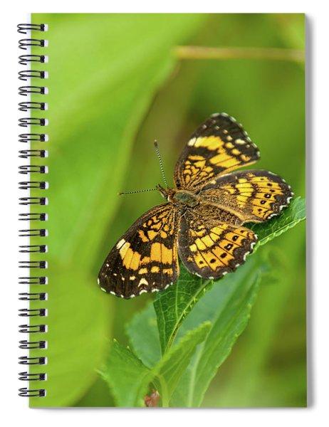 Silvery Checkerspot Butterfly Spiral Notebook