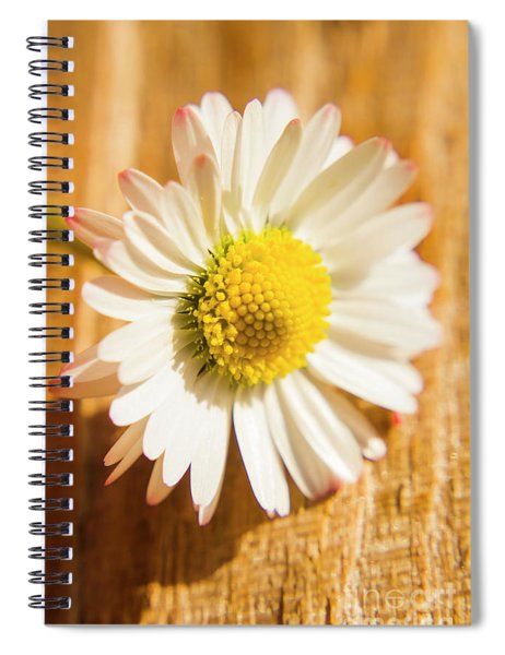 Simple Camomile  In Sunlight Spiral Notebook