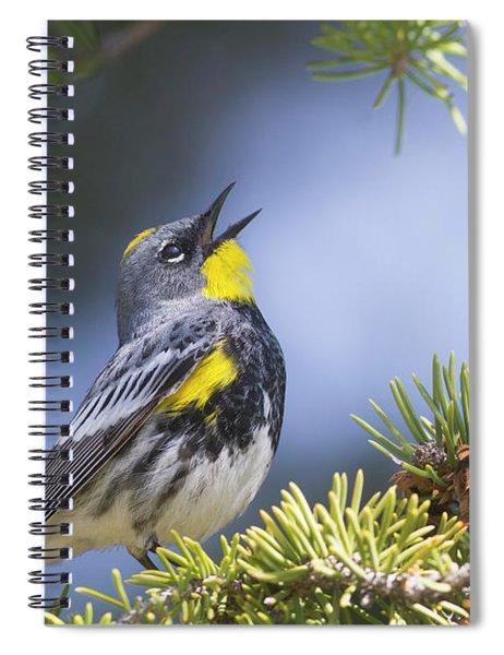 Singing Audubon's Warbler Spiral Notebook