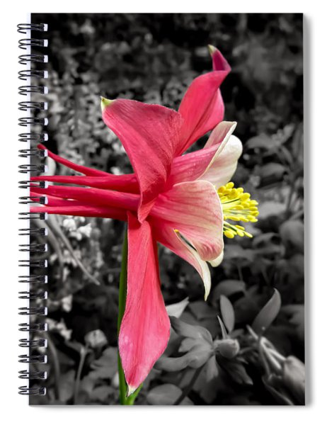 Single Columbine Profile Spiral Notebook
