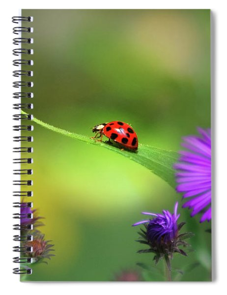 Single In Search Spiral Notebook