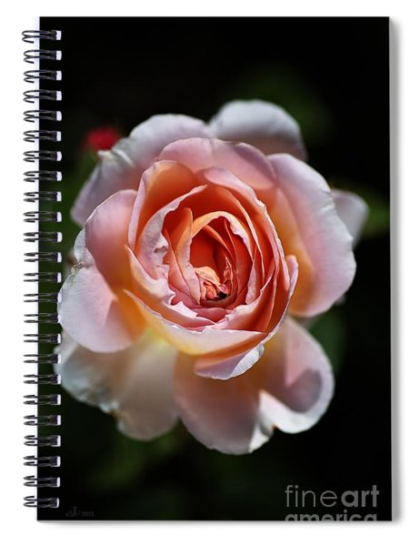 Single Romantic Rose  Spiral Notebook