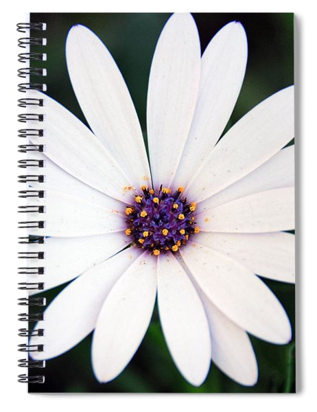 Single White Daisy Macro Spiral Notebook