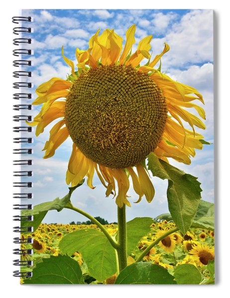 Spiral Notebook featuring the photograph Sister Golden Hair by Skip Hunt