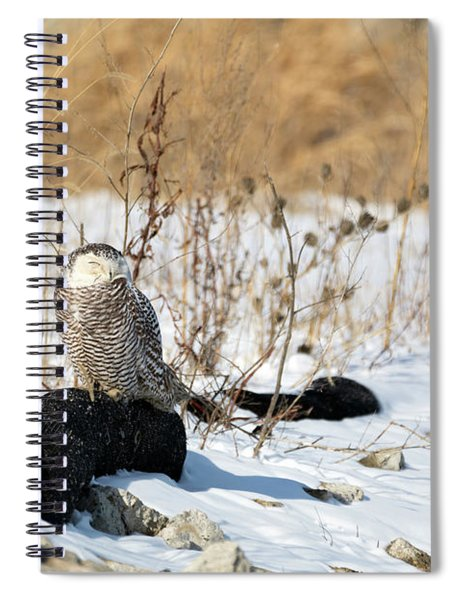 Sitting Snowy Spiral Notebook