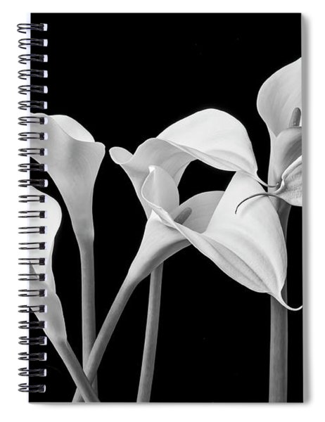 Six Calla Lilies In Black And White Spiral Notebook