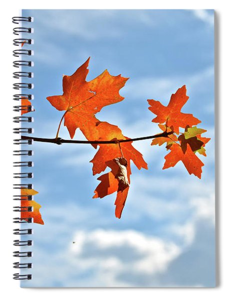 Sky View With Autumn Maple Leaves Spiral Notebook