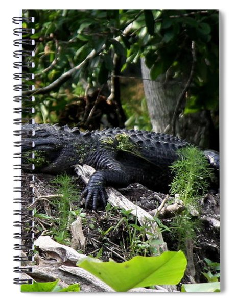 Sleeping Alligator Spiral Notebook