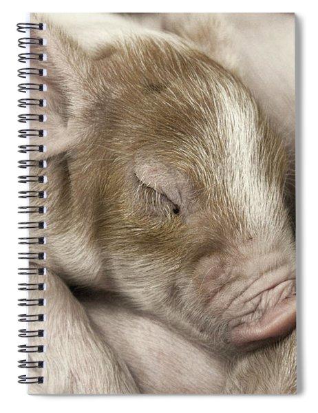 Sleeping Piglet Spiral Notebook