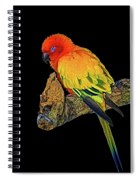Sleepy Sun Conure Spiral Notebook