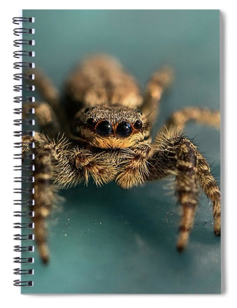 Small Jumping Spider Spiral Notebook