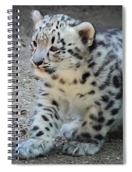 Snow Leopard Cub Spiral Notebook