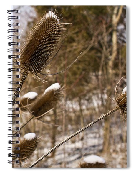 Snow On The Seed Cones Spiral Notebook