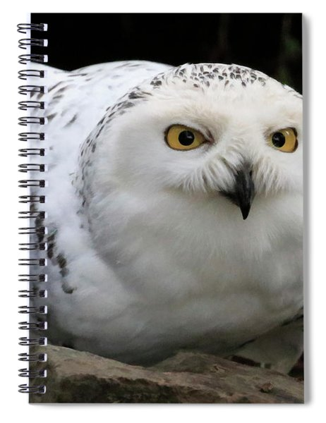 Snow Owl Rock Lean Spiral Notebook