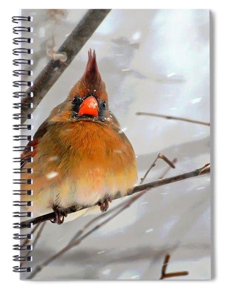 Snow Surprise Spiral Notebook