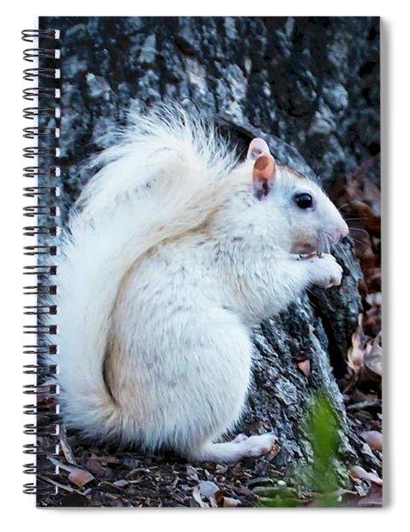 Snow White......squirrel, Spiral Notebook