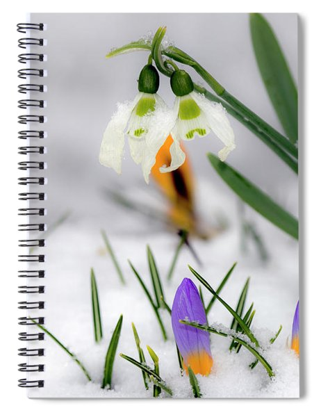 Snowdrops And Crocus Spiral Notebook