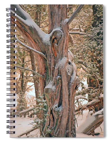 Snowy Dead Tree Spiral Notebook