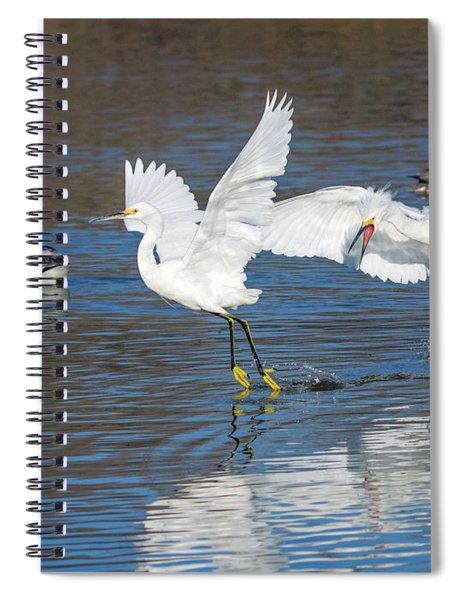 Snowy Egret Chase 9303-022218-1cr Spiral Notebook