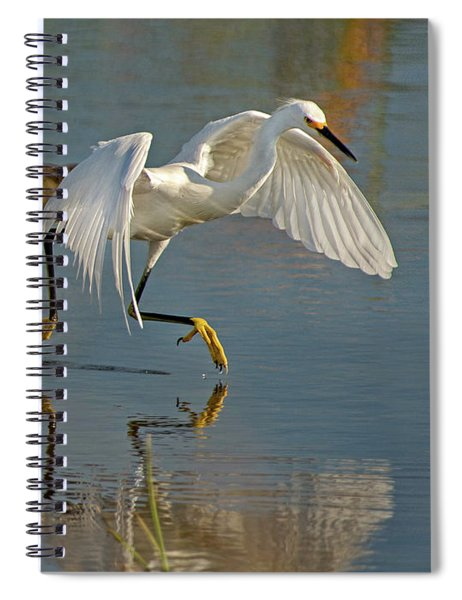 Snowy Egret On The Move Spiral Notebook