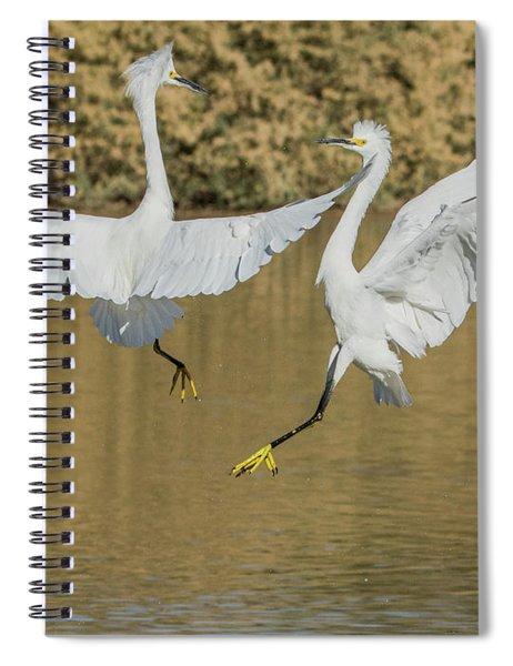 Snowy Egrets Dispute 3632-112317-1cr Spiral Notebook