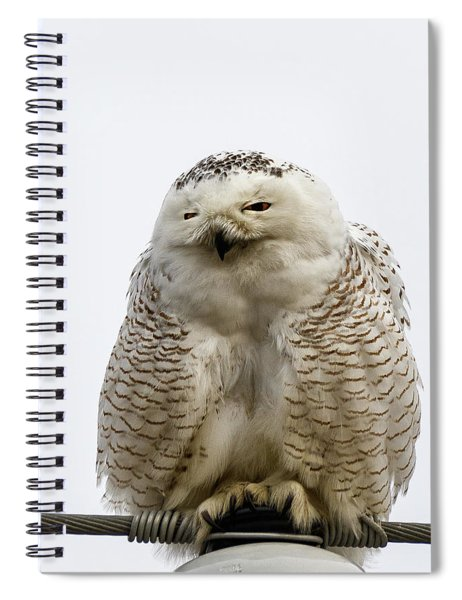 Snowy Impersonates Yoda Spiral Notebook