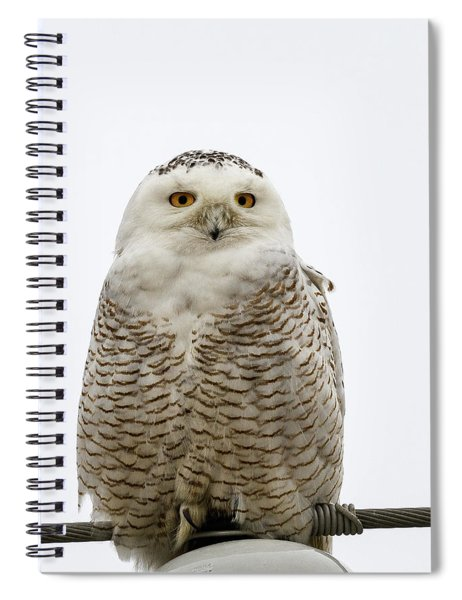 Snowy On A Wire Spiral Notebook