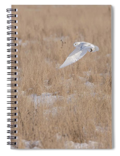 Snowy Owl 2018-19 Spiral Notebook