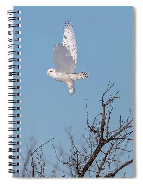 Snowy Owl 2018-5 Spiral Notebook