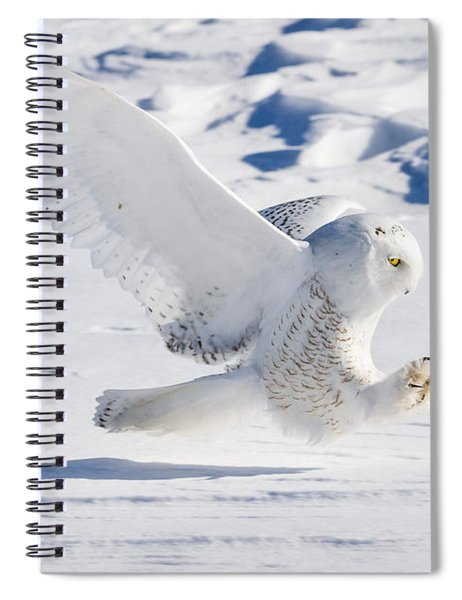 Snowy Owl Pouncing Spiral Notebook