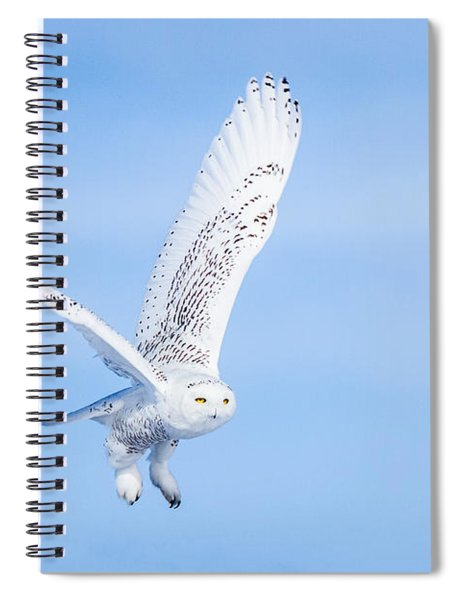 Snowy Owls Soaring Spiral Notebook