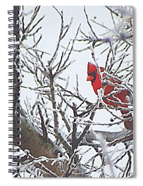 Snowy Red Bird A Cardinal In Winter Spiral Notebook