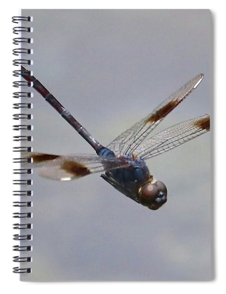 Soaring Dragonfly Spiral Notebook