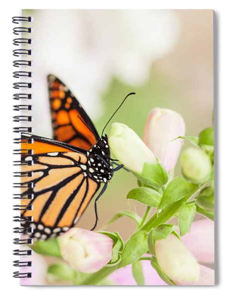Soft Spring Butterfly Spiral Notebook